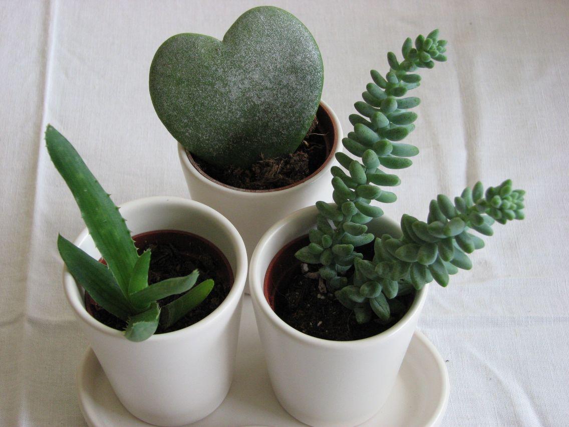 plante grasse ikea